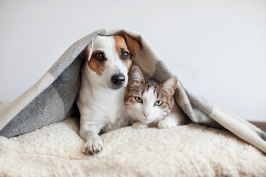 dog and a cat snuggling under a blanket