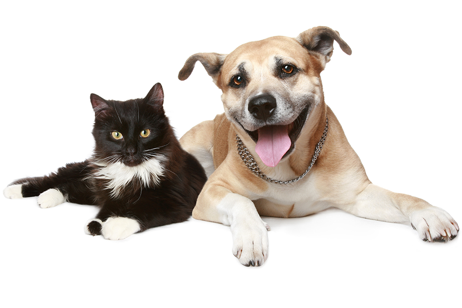 Photo of a dog and a cat lounging together looking at the camera